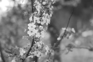 April7_050_3